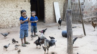 Children feed chickens outside their home in Brazil
