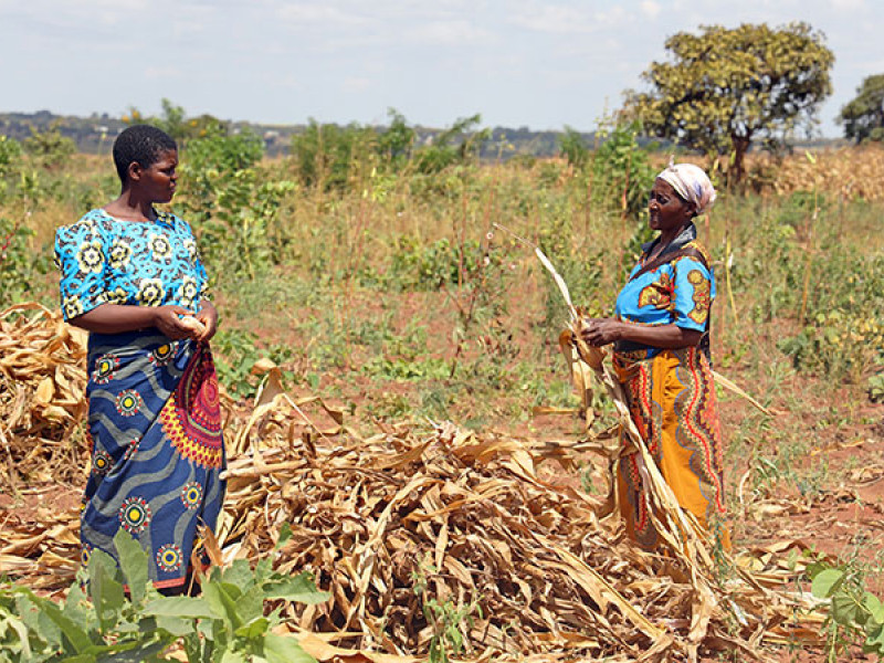 A photo of two female farmers in Malawi