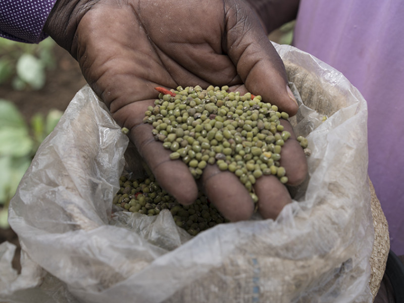 A community member holds the seeds we've been providing through our work in South Sudan.