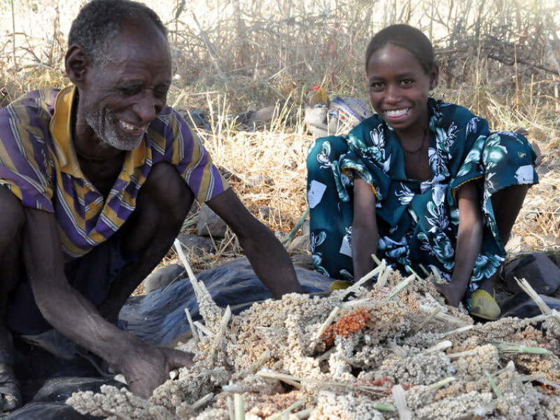 A farmer and his daughter harvesting drought-resistant crops in Ethiopia