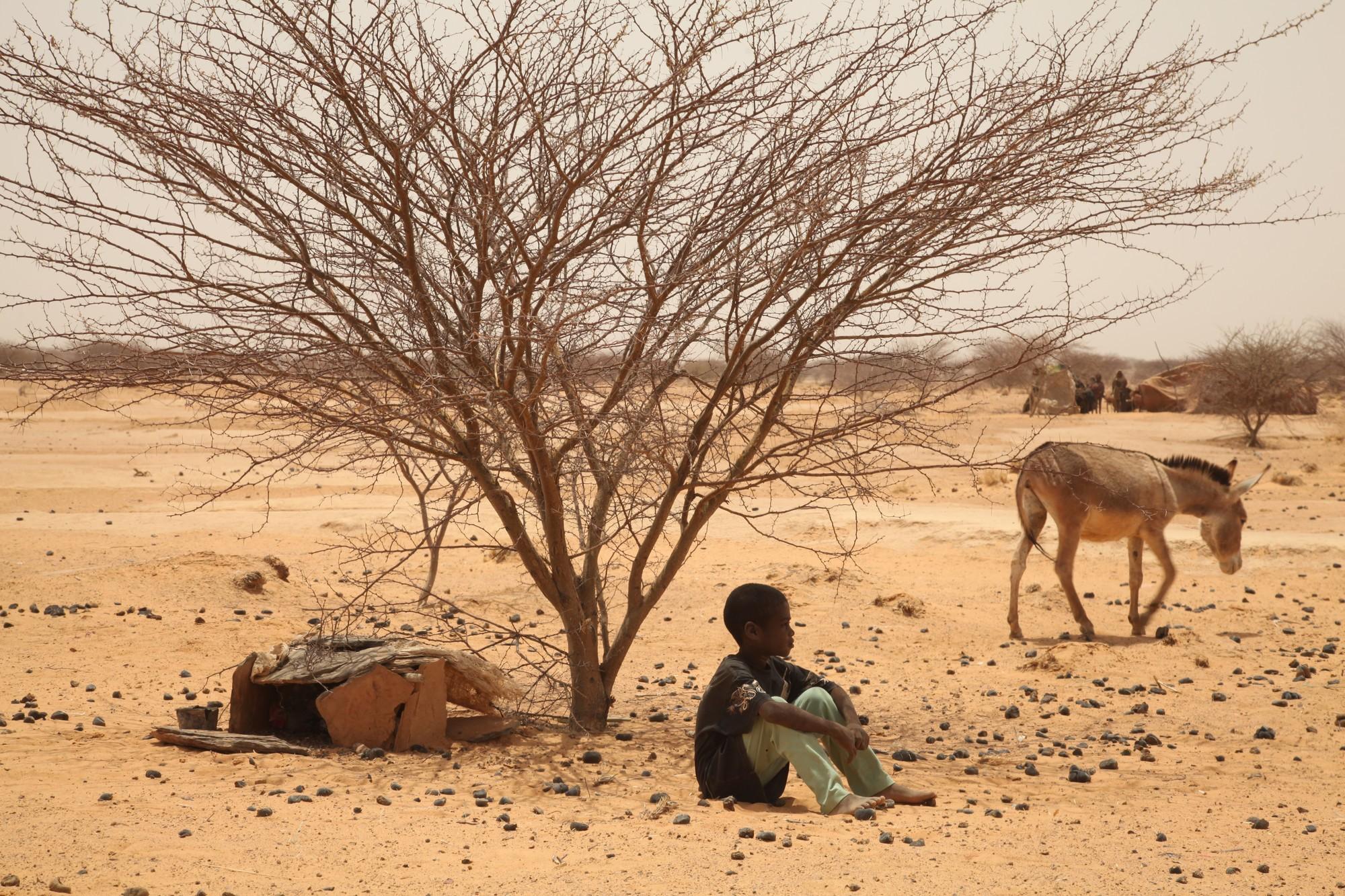 Malian refugee boy sheletring under tree in Gaoudel