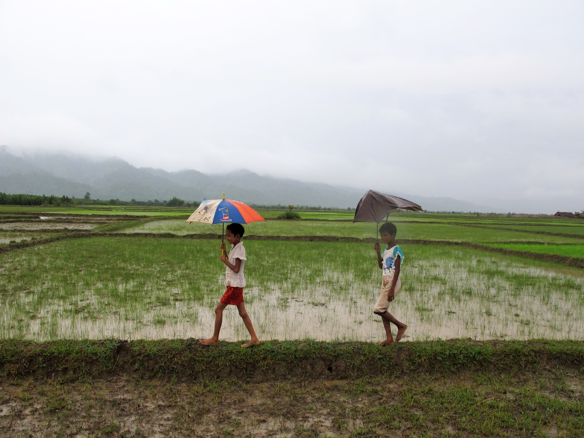 girls walk past rice paddies that have been destroyed by Cyclone Komen in Myanmar