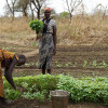 Farming in South Sudan