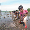 Children plant mangroves. Mangroves provide disaster protection from typhoon winds and the removal of atmospheric greenhouse gases that cause climate change